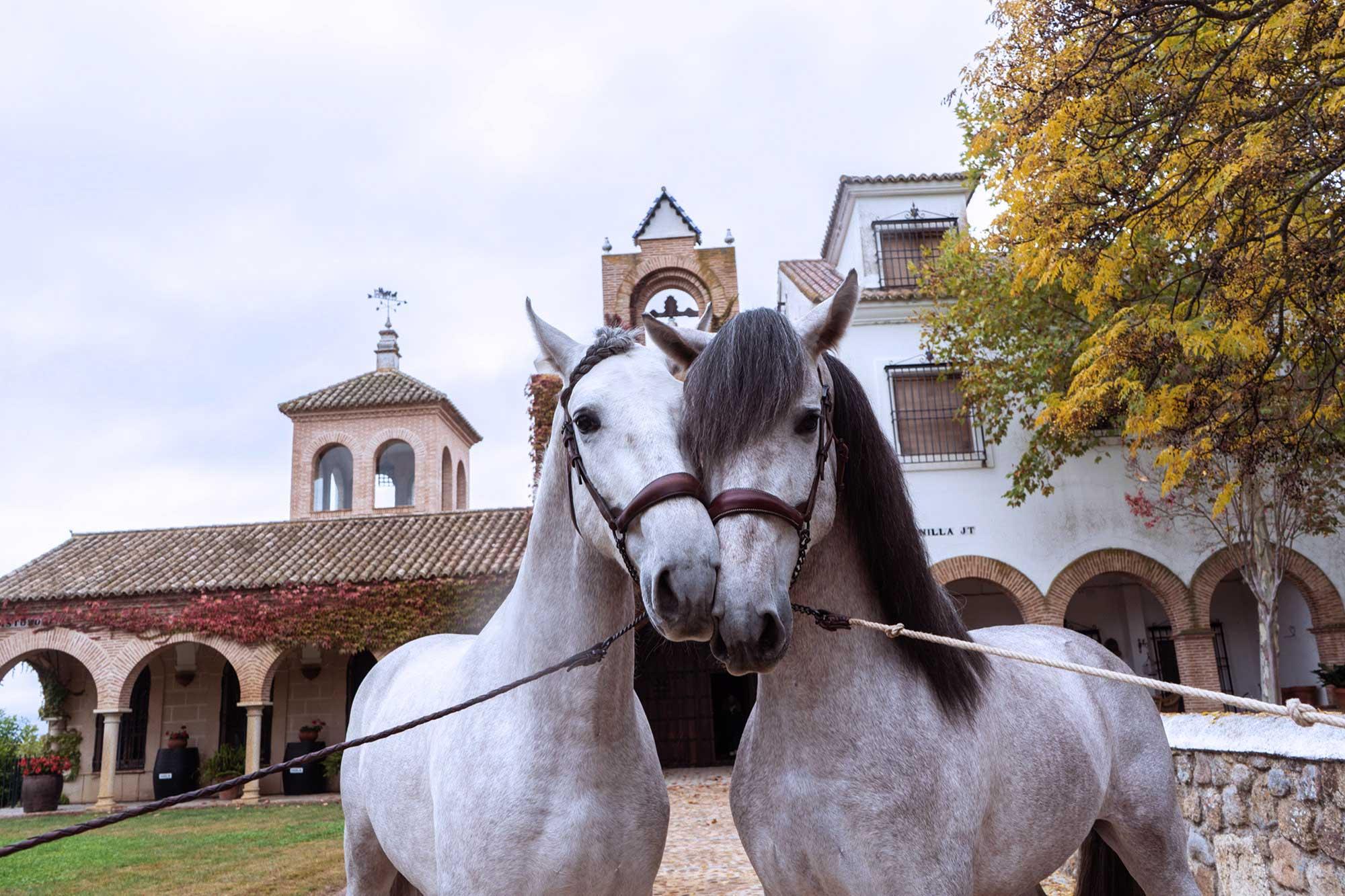 enoturismo-caballos-pura-raza-bodegas-habla-2
